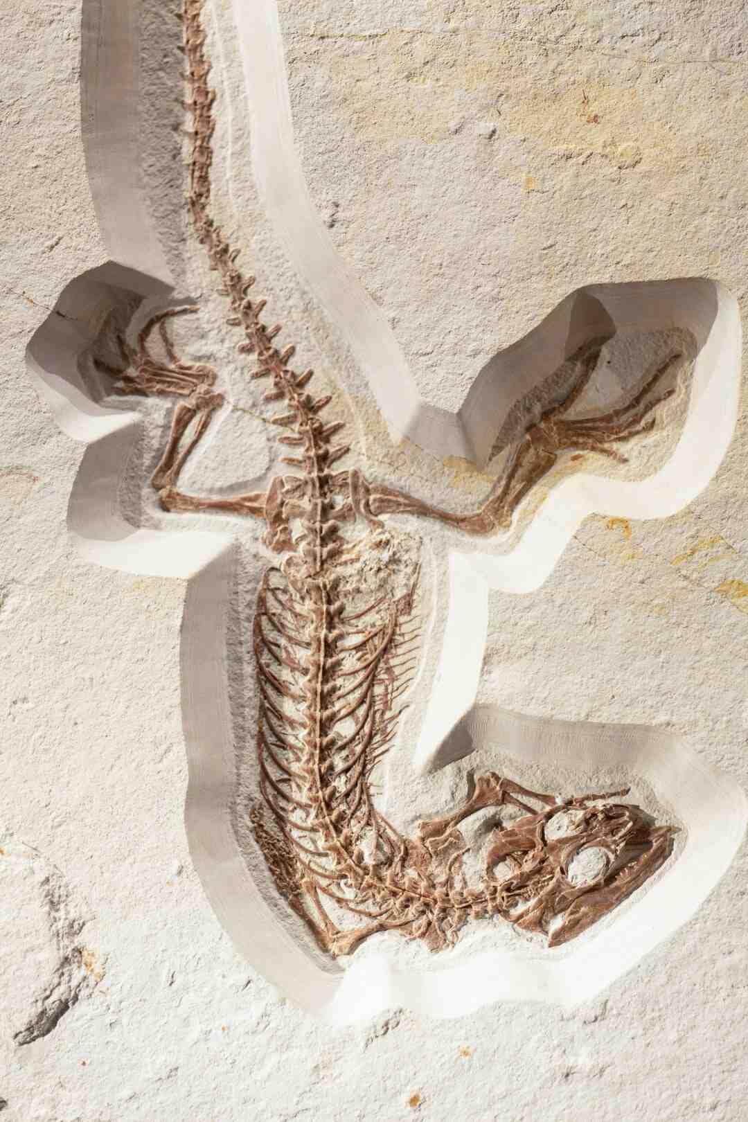 Comment fabriquer des fossiles avec du plâtre