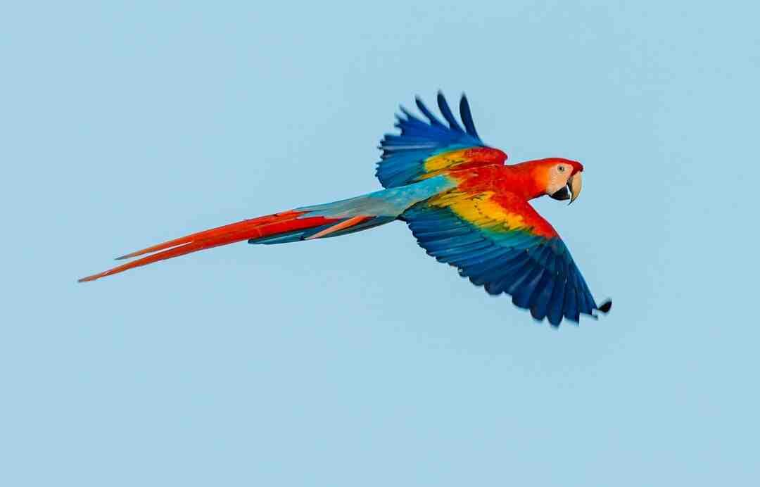 Comment nourrir un perroquet