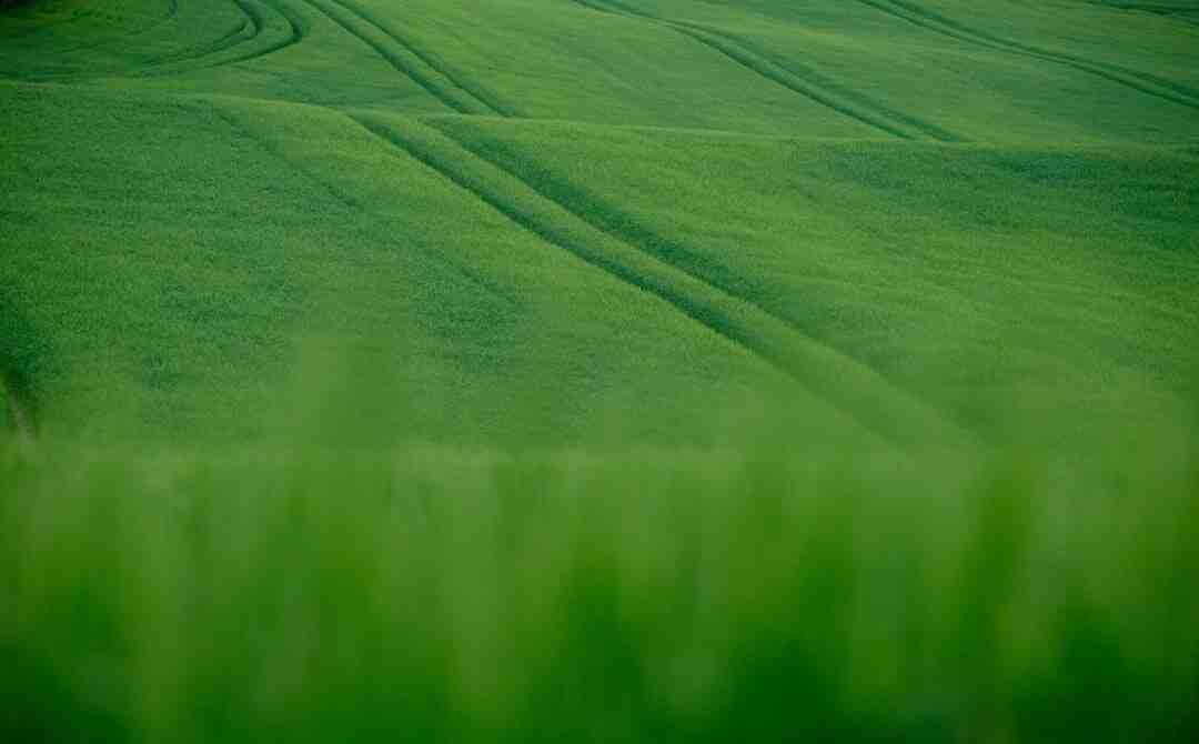Comment prendre soin d'anoles verts