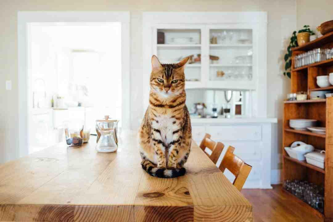 Comment un chat voit un humain ?