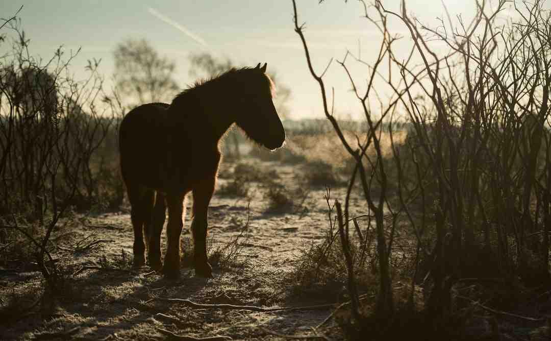 Comment vermifuger un cheval