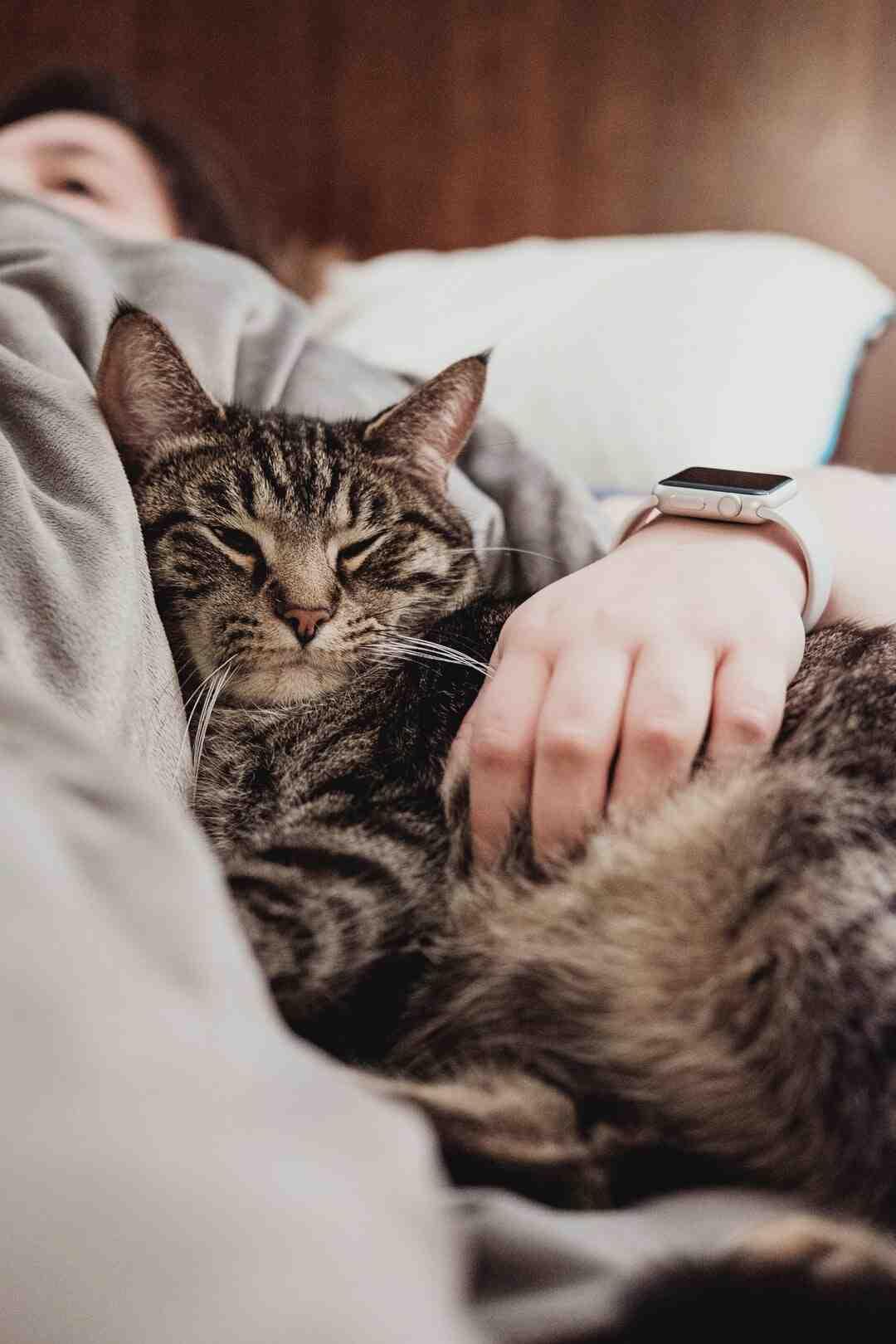 Comment retrouver un animal de compagnie grâce à une micropuce