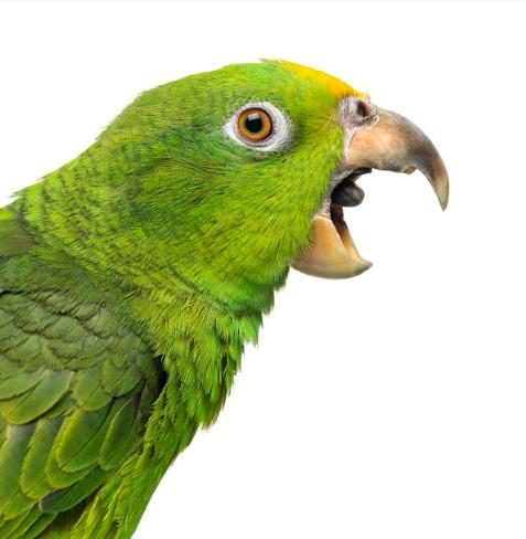 Est-ce que les oiseaux ont des zizi ?
