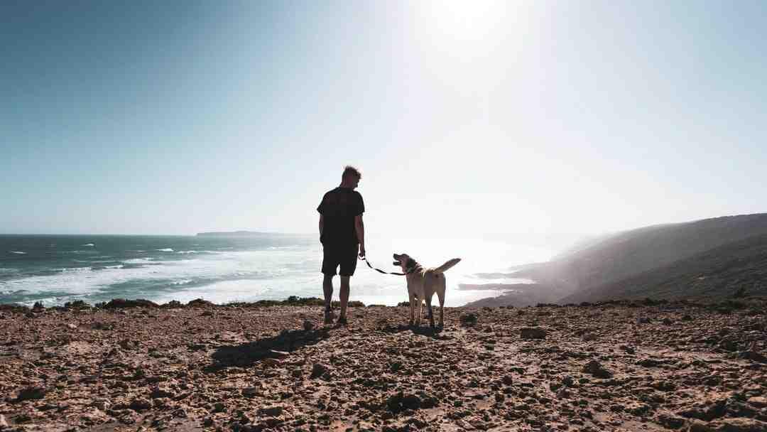 Comment aider deux chiens à s'accoupler