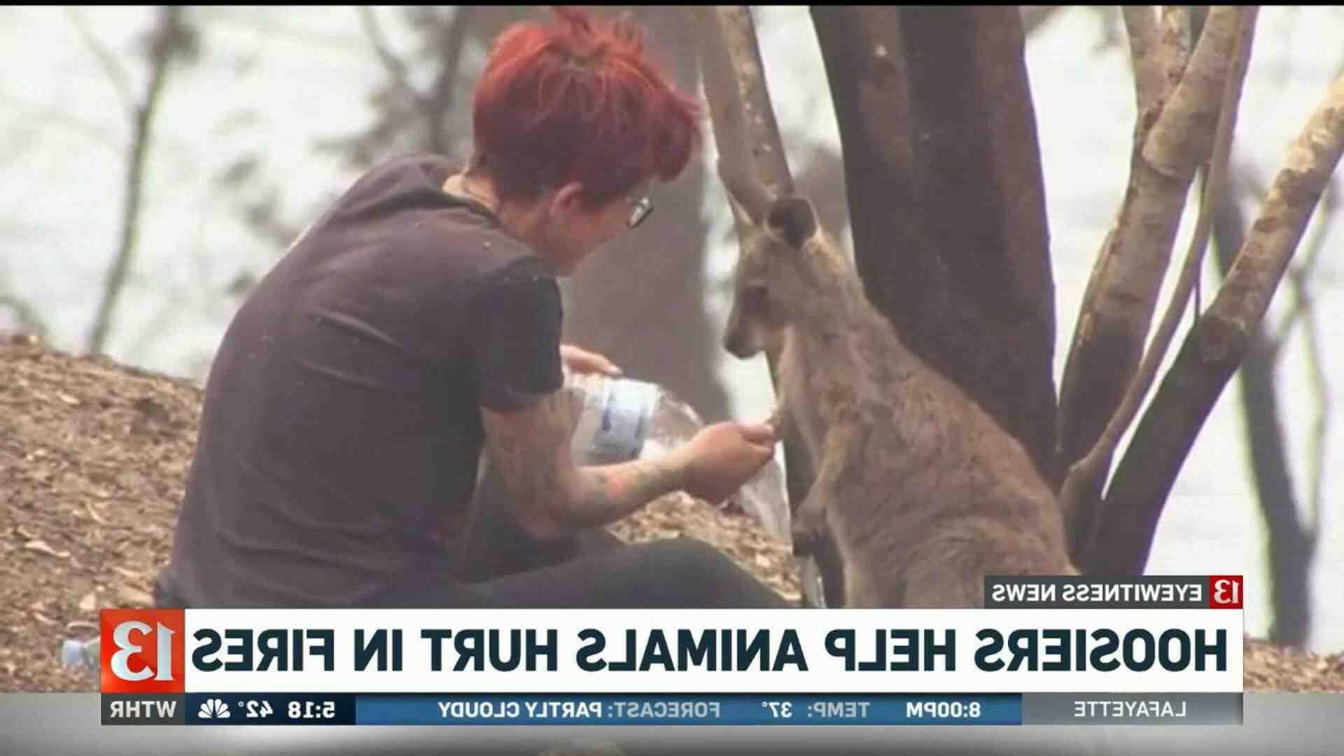 Comment aider les animaux en australie