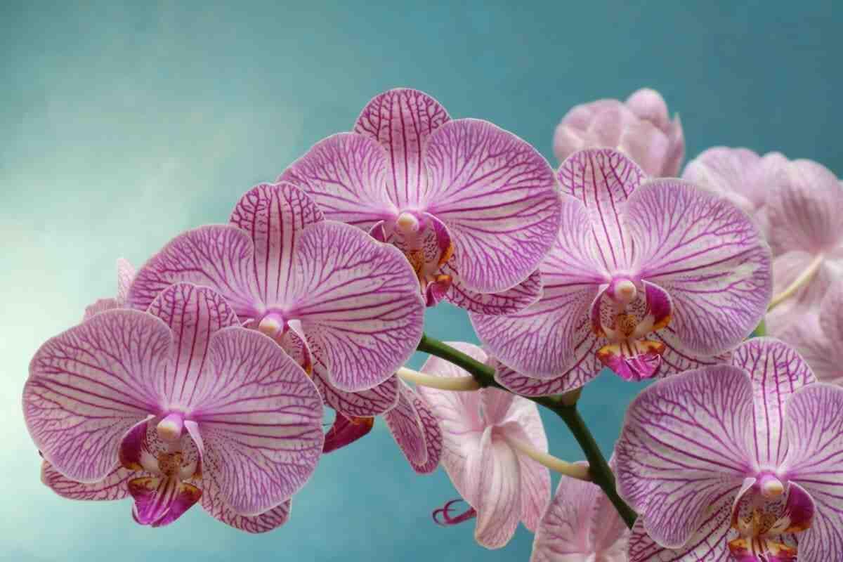 Comment savoir si l'orchidée est mort ?
